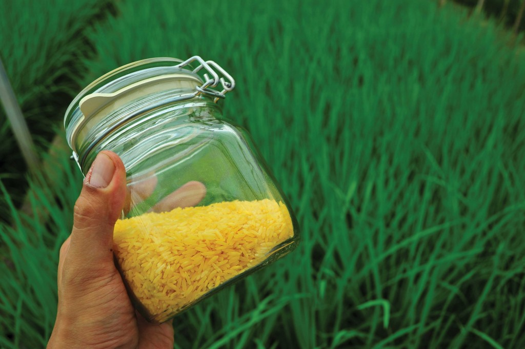 Golden-Rice-Jar