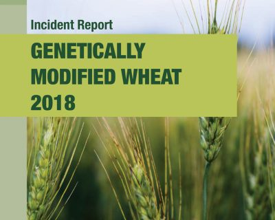 GM WHEAT DISCOVERY REVEALED IMPORTANT LESSONS