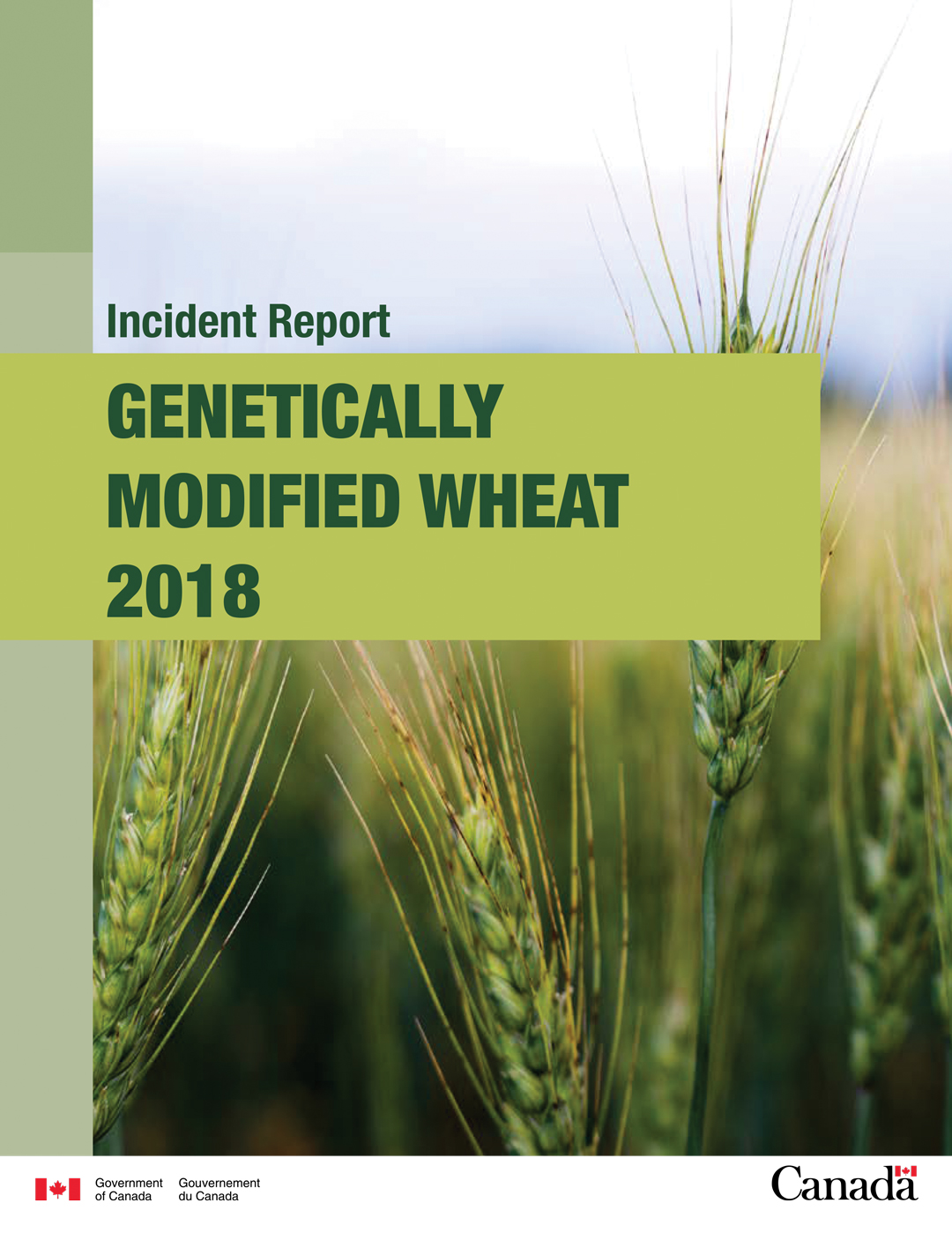 GM WHEAT DISCOVERY REVEALED IMPORTANT LESSONS – grainswest