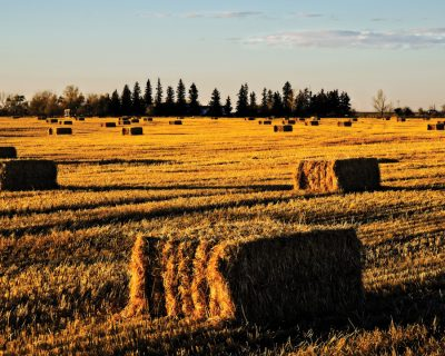FINDING THE PAYOFF IN AG BIOMASS